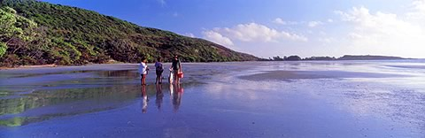 Pudagha Beach - Cape Tribulation